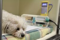 The Patients Of Perth Vet Emergency
