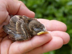 found baby bird