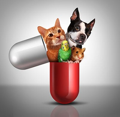Can I Give My Dog Paracetamol >> Can I Give My Dog Panadol