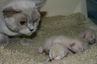 Advice For Pets Having Trouble Giving Birth