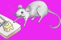 Rat Bait Is Very Dangerous For Pets