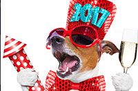 Dogs And New Years Eve Fireworks