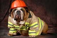 Emergency Planning For Perth's Pets