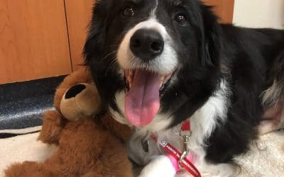 Winnie the Star Patient