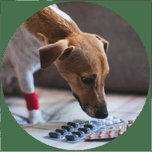 animal-emergency-center-perth-vet-emergency
